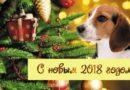 Новый год 2018 – год какого животного по Восточному календарю. Как встречать и что готовить в год Желтой Собаки?